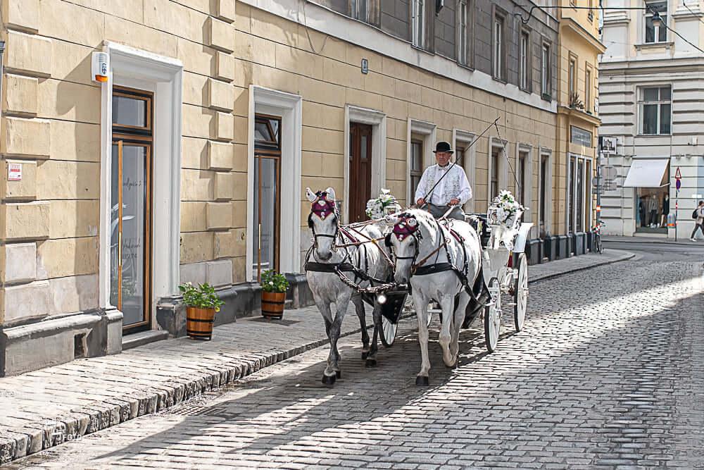 Pferde der Wiener Fiakerzentrale